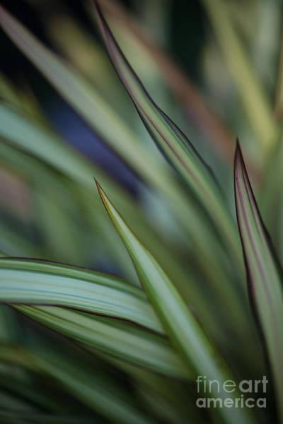 Succulent Photograph - Razor Kaleidoscope by Mike Reid