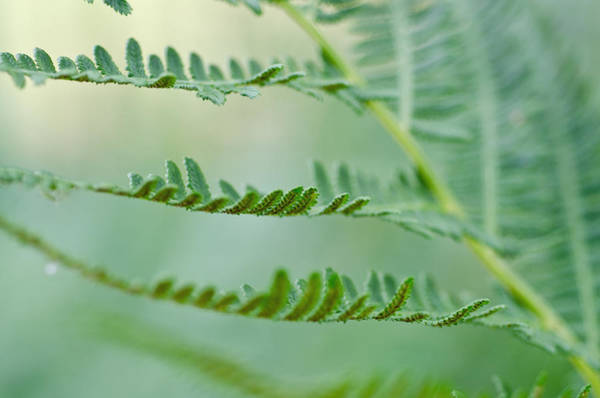 Reaching Ferns Art Print by Margaret Pitcher