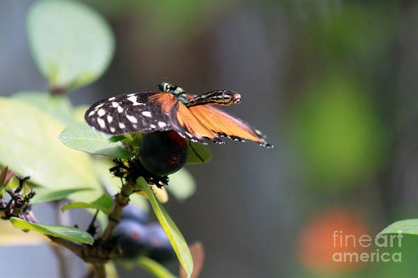 Wall Art - Photograph - Ready For Take Off by Eric Irion