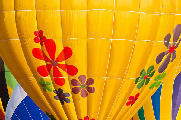 Photograph - Ready To Fly High by Colleen Coccia