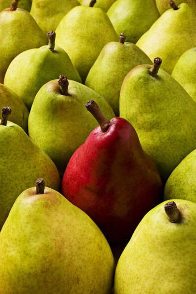 Outstanding Photograph - Red And Green Pears  by Garry Gay