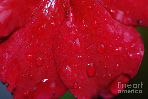 Wall Art - Photograph - Red And Wet by Paul Ward