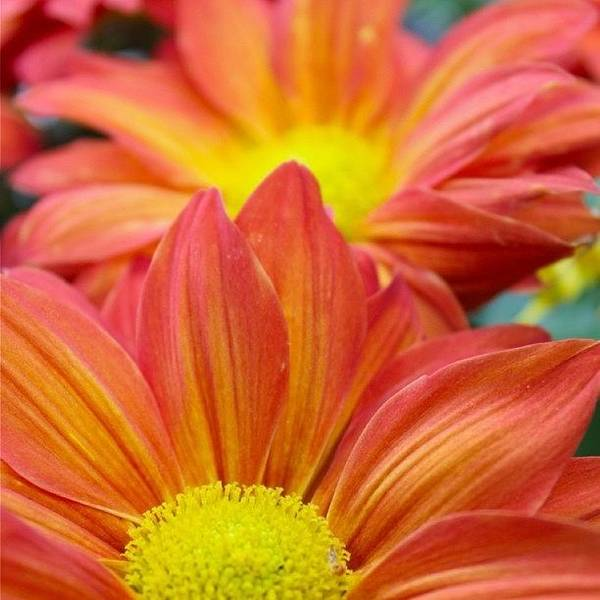 Petals Wall Art - Photograph - Red And Yellow Flowers   by Justin Connor