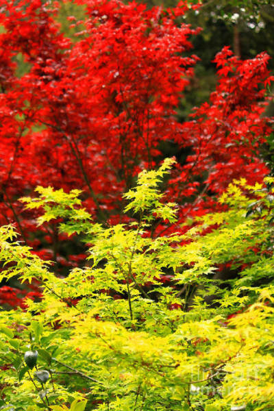 Photograph - Red And Yellow Leaves by James Eddy