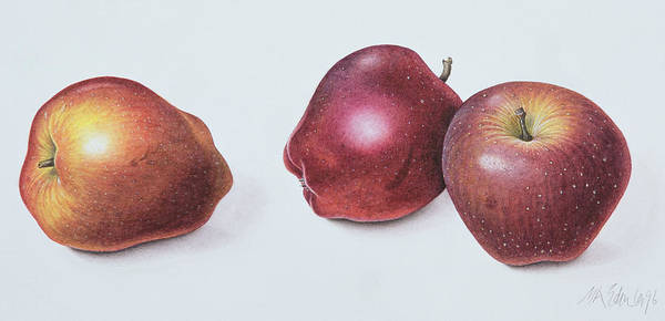 Wall Art - Painting - Red Apples by Margaret Ann Eden