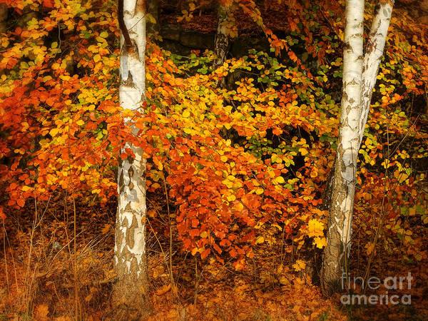 Photograph - Red Autumn by Lutz Baar