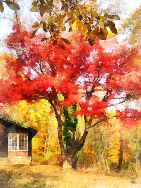 Photograph - Red Autumn Sycamore by Susan Savad
