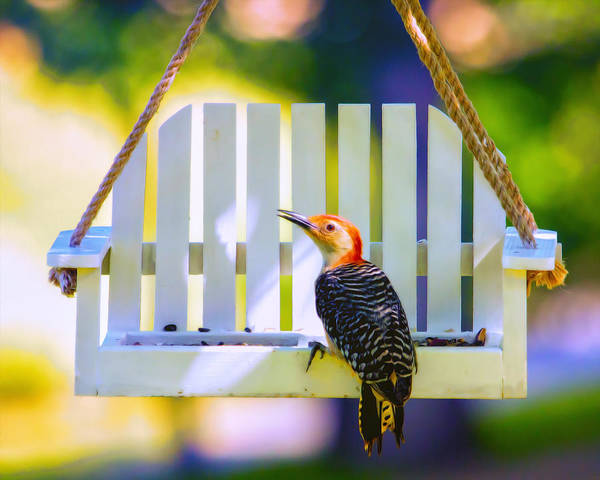 Red Bellied Woodpecker Photograph - Red-belly Comes For Lunch by Bill Tiepelman