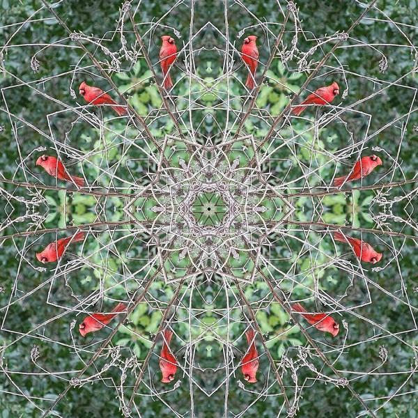 Katrina Digital Art - Red Bird by Katrina Johns