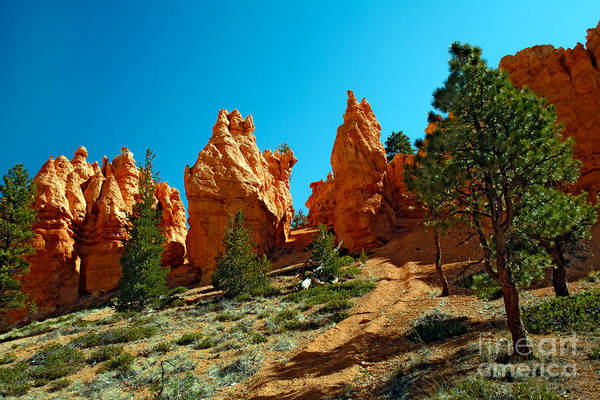 Highway 12 Wall Art - Photograph - Red Canyon Trail by Robert Bales