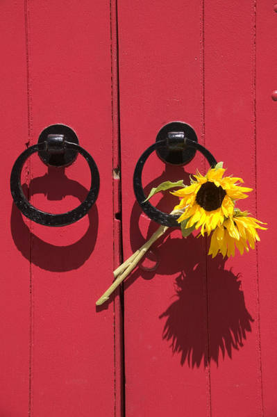 Photograph - Red Door Sunflowers by Garry Gay