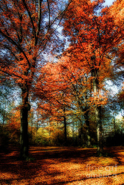 Photograph - Red Fall by Hannes Cmarits