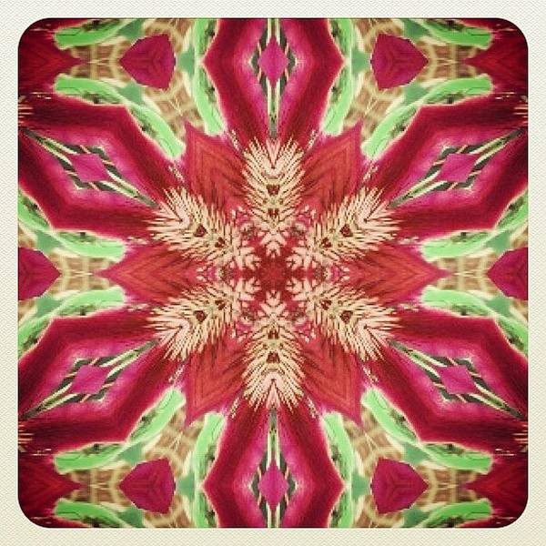 Fractal Wall Art - Photograph - #red #green And #pink #hippie #mandala by Pixie Copley