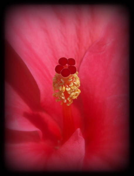Photograph - Red Hibiscus by James Granberry