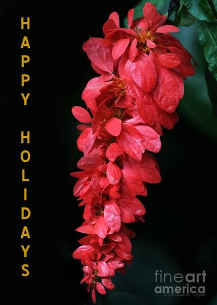 Photograph - Red Holiday Greeting Card by Sabrina L Ryan