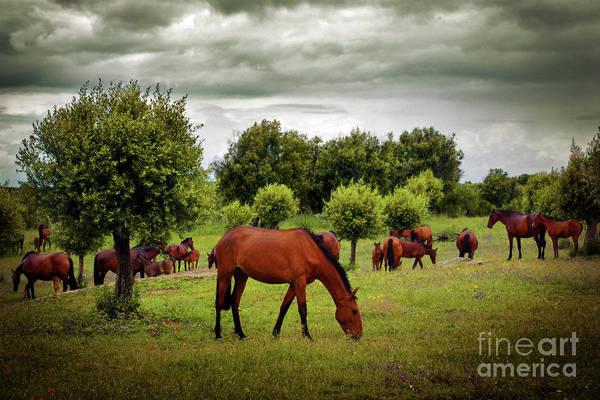 Purebred Wall Art - Photograph - Red Horses by Carlos Caetano