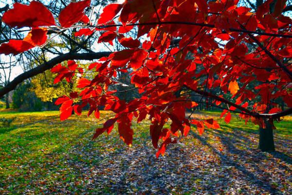 Photograph - Red Leaves by Dragan Kudjerski