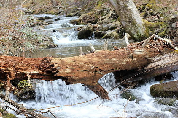 Wall Art - Photograph - Red Log Stream Part 2 by Shana Smith
