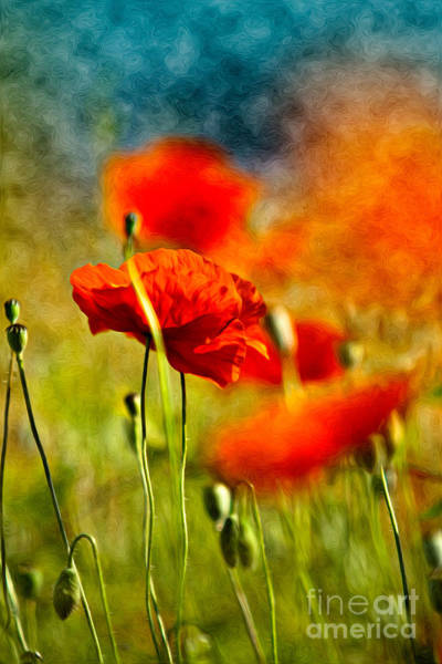 Background Painting - Red Poppy Flowers 01 by Nailia Schwarz