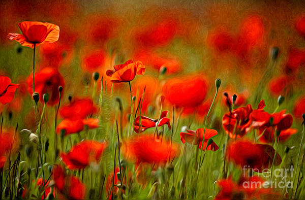 Background Painting - Red Poppy Flowers 02 by Nailia Schwarz