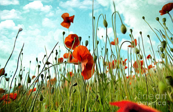 Background Painting - Red Poppy Flowers 03 by Nailia Schwarz
