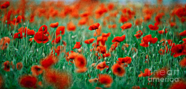 Background Painting - Red Poppy Flowers 04 by Nailia Schwarz