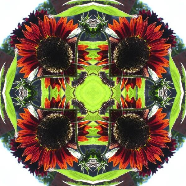 Digital Art - Red Sunflowers And Leaf by Trina Stephenson