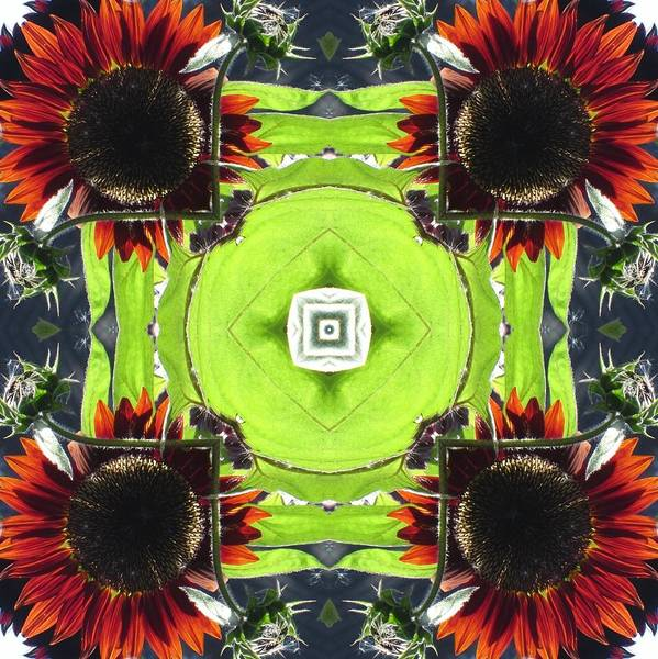 Digital Art - Red Sunflowers In A Square by Trina Stephenson