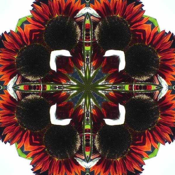 Digital Art - Red Sunflowers by Trina Stephenson