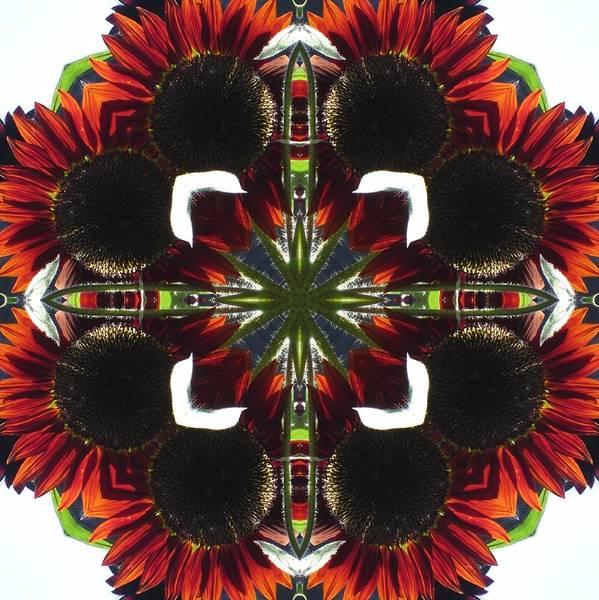 Red Sunflowers Art Print