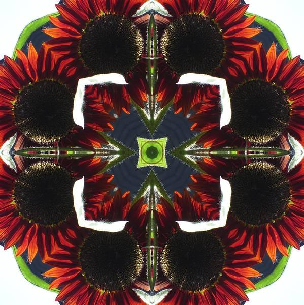 Digital Art - Red Sunflowers With Blue Center by Trina Stephenson