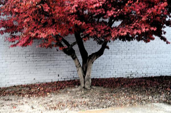 Wall Art - Digital Art - Red Tree Dark by Affini Woodley