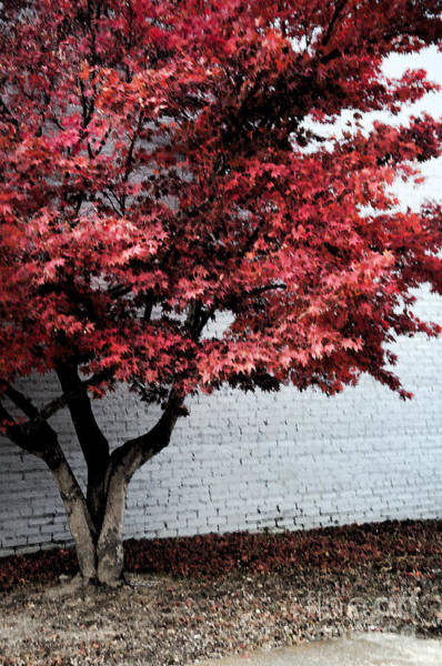 Wall Art - Digital Art - Red Tree Dark Vertical by Affini Woodley
