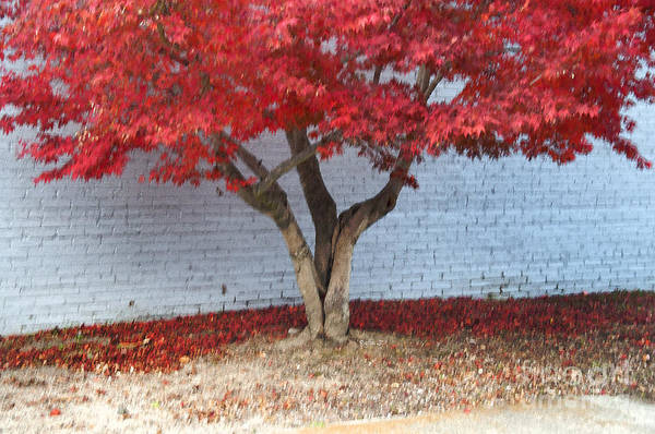 Wall Art - Photograph - Red Tree Horizontal by Affini Woodley