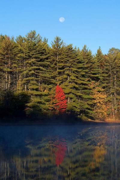 Photograph - Red Tree Moon by Larry Landolfi