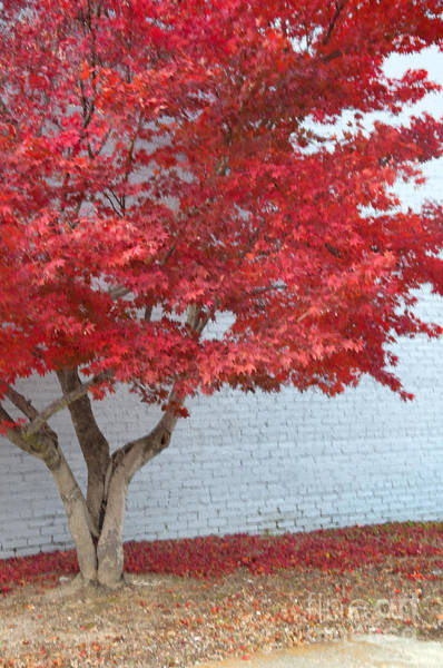 Wall Art - Digital Art - Red Tree Vertical by Affini Woodley
