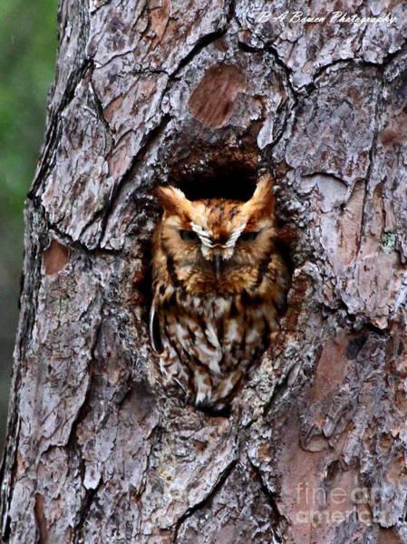 Photograph - Reddish Screech Owl by Barbara Bowen