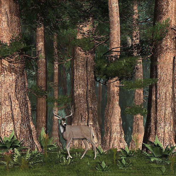 Sportsman Digital Art - Redwood Buck by Walter Colvin