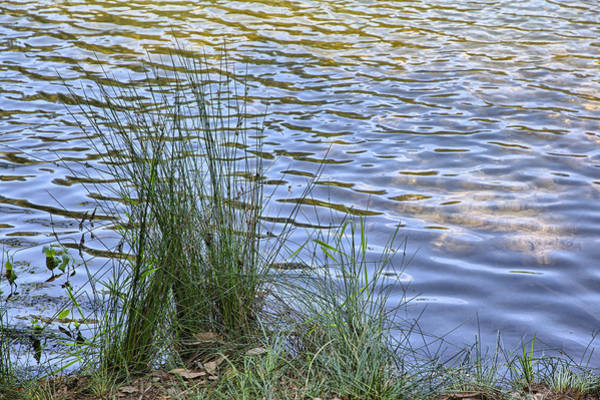 Photograph - Reeds And Ripples by Peter Dyke