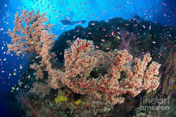 Photograph - Reef Scene With Sea Fan, Papua New by Steve Jones