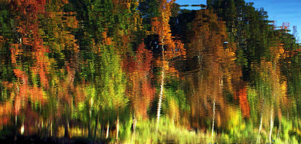 Photograph - Reflection by Sheila Kay McIntyre