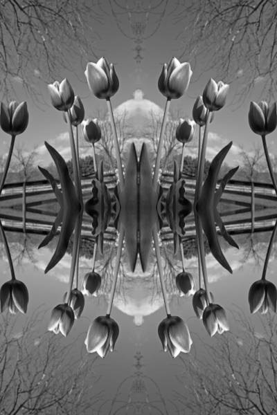 Blooms Digital Art - Reflections by Betsy Knapp