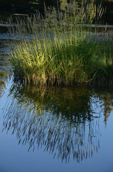 Photograph - Reflections by Craig Ratcliffe