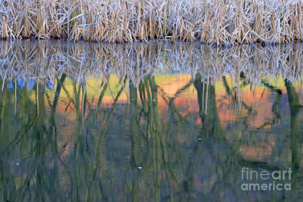 Photograph - Reflections by David Birchall