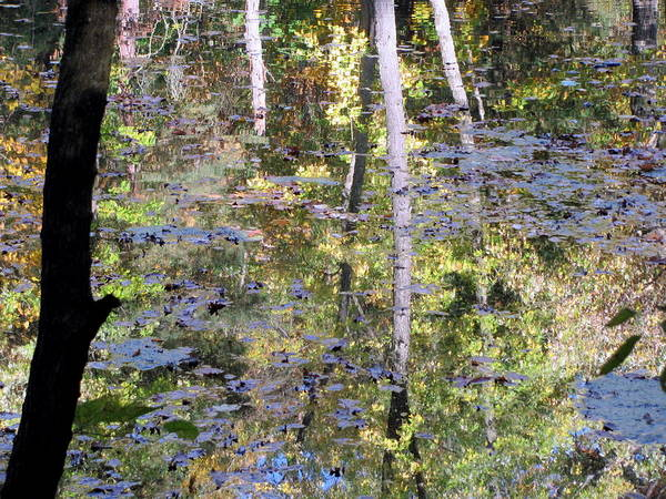 Photograph - Reflections In Paradise 4 by Anita Burgermeister