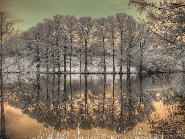 Linder Wall Art - Photograph - Reflections by Jane Linders