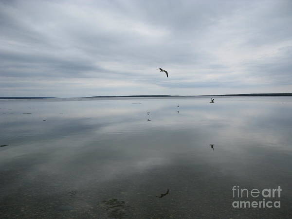 Waskesiu Photograph - Reflections Of Birds On A Lake by Kelsey Horne