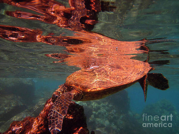 Photograph - Reflections Of Honu by Bette Phelan