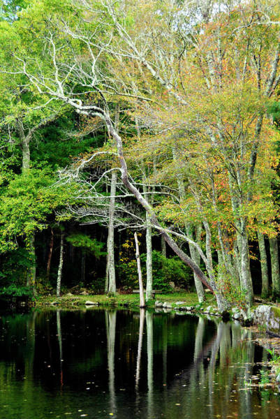 Photograph - Reflections On A Fall Day by Joanne Brown