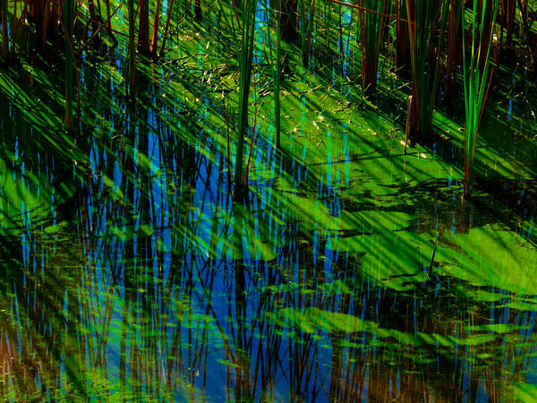 Photograph - Reflections by Randy Sylvia